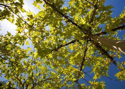 Baumpflege von Team Grün Furtner