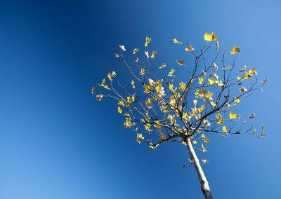 Die Richtige Baumpflege Für Den Garten Ist Wichtig