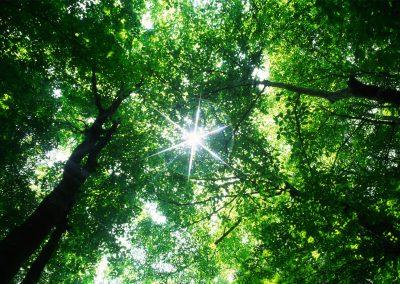 Baumpflege Für Gesunde Und Vitale Bäume