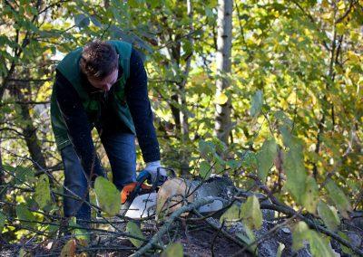 Baumpflege Durch Team Grün