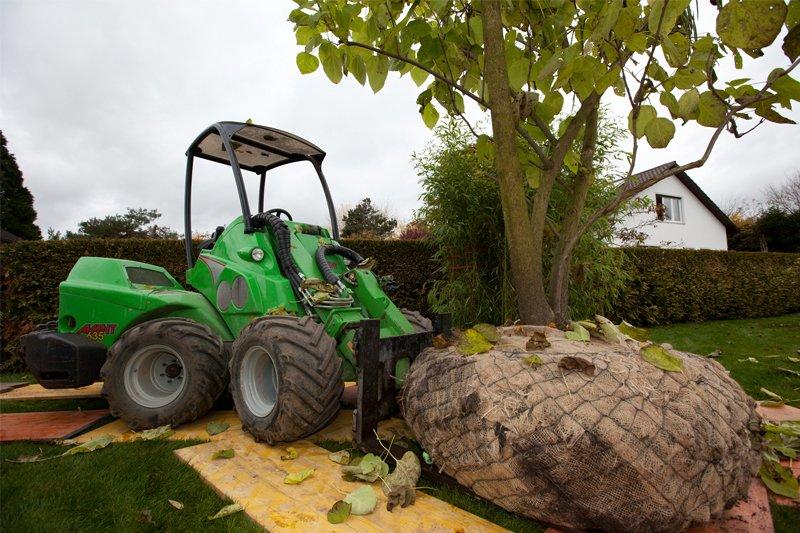 Baumpflege für gesunde und starke Bäume