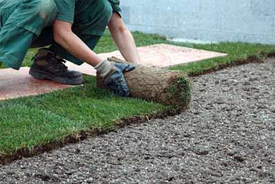 Rollrasen für die perfekte Grünfläche im Garten