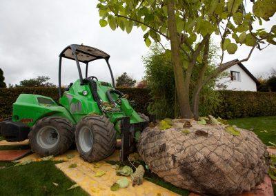 Baumpflanzung durch Experten Team Grün
