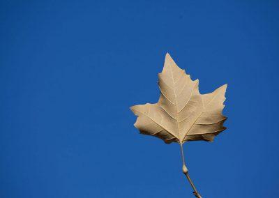 Herbstlaub bildet besten Humus