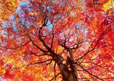 Buntes Herbstlaub bietet einige Verwendungszwecke