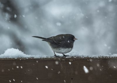 Gartenvogel im Winter