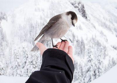 Vogel-im-Winter-fuettern