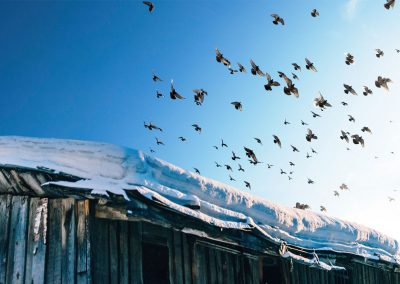 Zugvoegel-im-Winter
