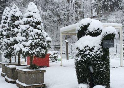 Gartenpflanzen unter Schneedecke