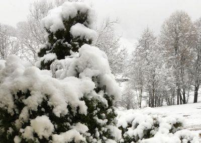 Gartenpflanzen Unter Dicker Schneedecke