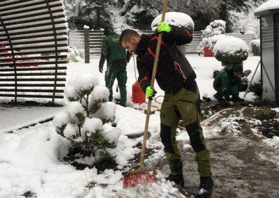 Zu dicke Schneedecken schaden Ihren Pflanzen