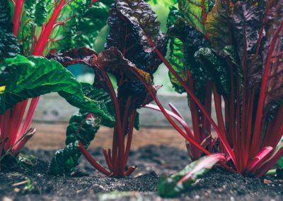 Säen Und Pflanzen Von Gemüse Im März