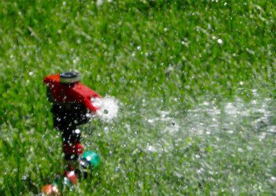 Auch der Rasen brauch Wasser