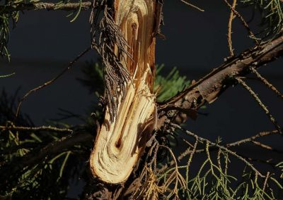 Bäume müssen besonders geschützt werden