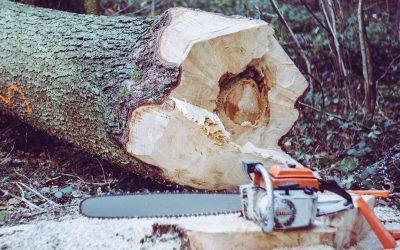 Bäume richtig Fällen