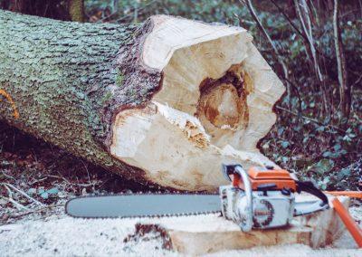 Einen Baum sicher mit der Motorsäge fällen