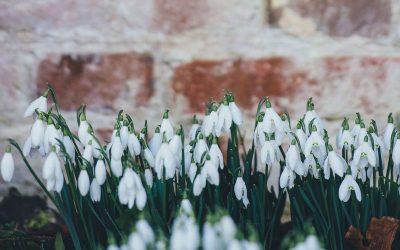 Winterharte Pflanzen für den Garten im Winter