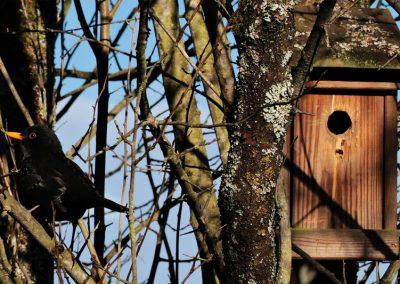 Vogelhaus Für Gartenvogel