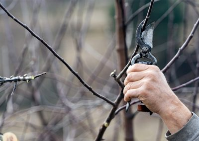 Beschneidung von Bäumen und Sträucher