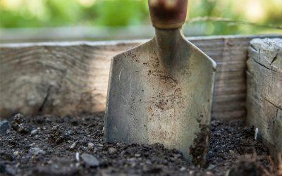 Gartentipps für den Februar