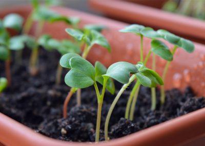 Gartenarbeiten für Anfänger