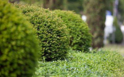 Tipps für den Garten im Mai