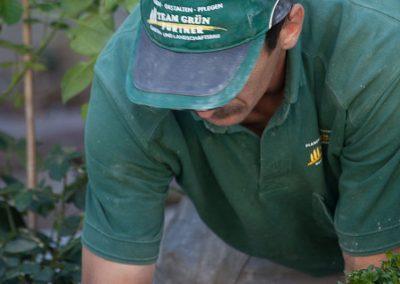 Unkraut im Garten entfernen