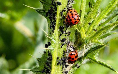 Pflanzenschädlinge – Erkennen und richtig bekämpfen