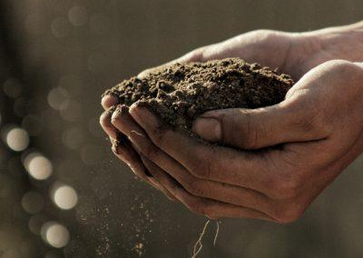 Gewonne Erde Aus Kompost