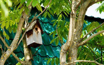 Nistplätze für Vögel aufstellen
