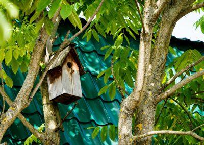 Vogelnistkasten Am Baum