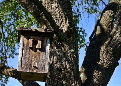 Freihängender Vogelnistkasten Am Baum