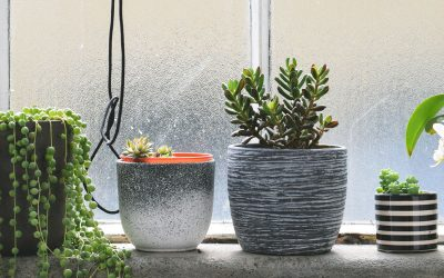Gesundes Raumklima für Pflanzen im Winter
