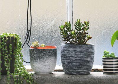 Pflanzen Auf Einer Fensterbank