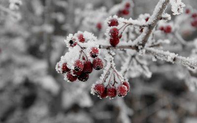 Frostschutz für Pflanzen