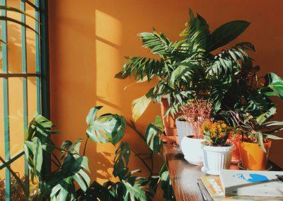 Pflanzen Vor Großem Fenster