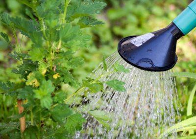 Im Garten Nachhaltig Gießen