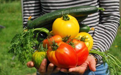 Gemüse vorziehen