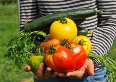 Gemüseernte Im Sommer