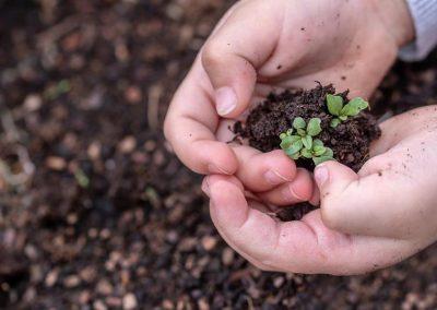 Erste Saat Einpflanzen