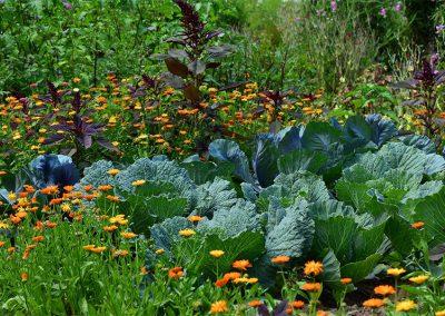 Garten Optimal Kalken