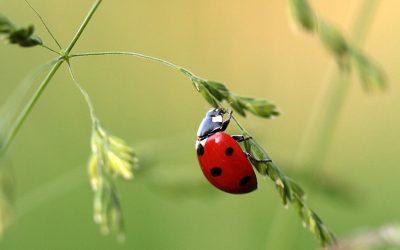 Biologischer Pflanzenschutz Mit Großer Wirkung
