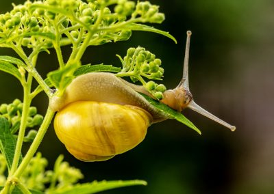 Schnecken Können Mit Biologischen Pflanzenschutz Verscheucht Werden