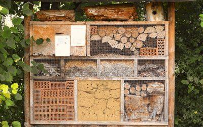 Insektenhotel Aufhängen Leicht Gemacht