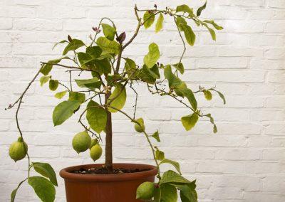 Exotische Topfpflanzen Im Winter Pflegen