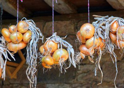 Zwiebel halten sich gut über die kalte Jahreszeit