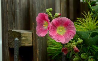 5 Pflanzen Im Mai